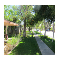 Maple Ash Home- Single Family - Tempe rentals